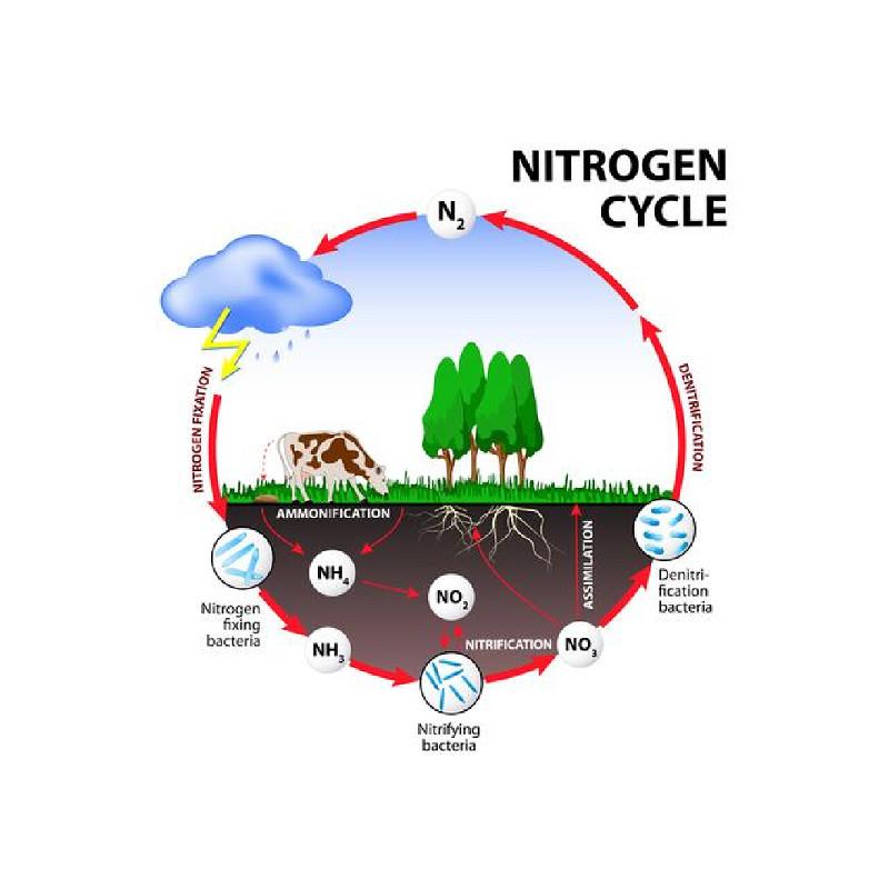 Cách loại bỏ nitrat khỏi nước